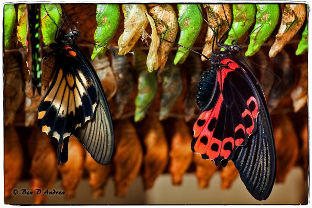 Arkansas Valley Audubon Society